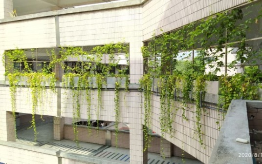 蘭雅國小綠牆1