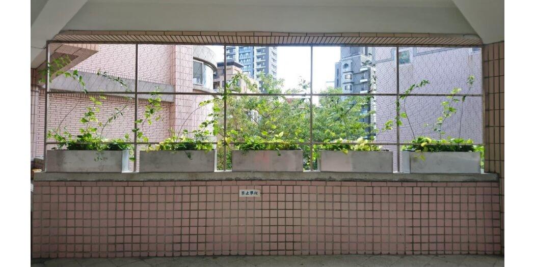 蘭雅國小綠牆