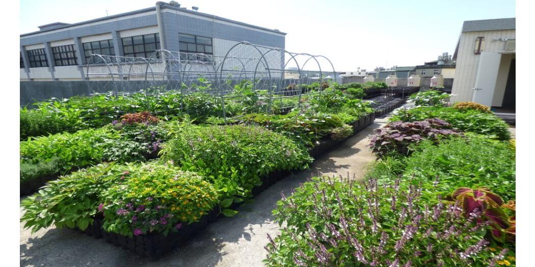 元培科技大學盆缽菜園型+薄層型綠屋頂