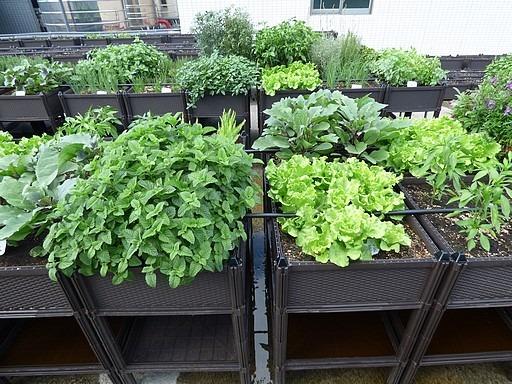 有機蔬菜箱綠屋頂案例