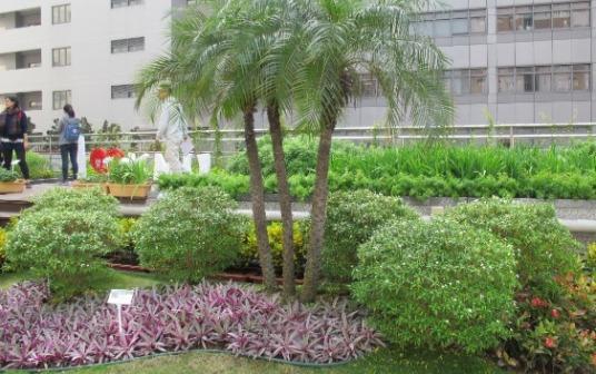 高醫空中花園4