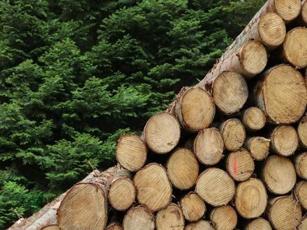 木頭與森林